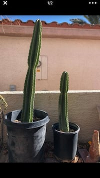 Cactus large 15 and small 10 Las Vegas, 89131