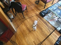 Playpen for dog, cat, pets Providence, 02909