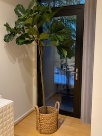 Fiddle Leaf Tree (6 ft) from World Market and Basket from Pottery Barn Arlington, 22206