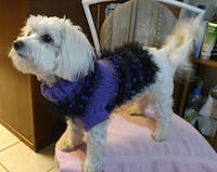 GORGEOUS (1-UV-A-KIND) HAND-KNITTED DOG SWEATERS!! Tempe, 85284