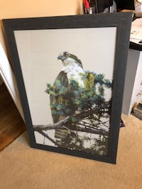 Hawk painting . Dark frame . Behind glass Matthews, 28105