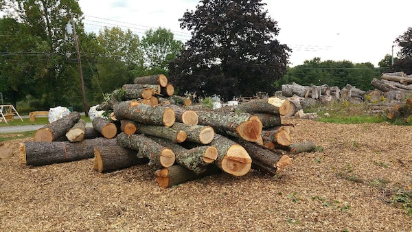 cherry logs for sawmill or food grade smokers