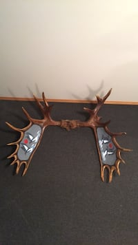 Moose antlers with loons,  indigenous artwork by C.Albany, '99 in very good condition  null, R0K