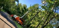 tree service,removal,pruning and shape. Jersey City