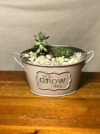 Succulent Plants - Gifts! 546 km