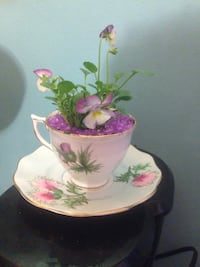 Pansies in bone China tea cup with saucer Hamilton, L8L 6M8