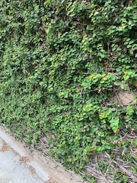 Fence wall greenery cutting New Orleans, 70130