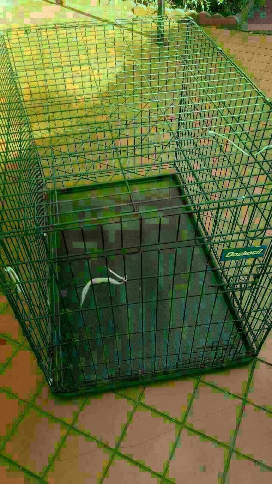 Used 2 dog house large in miami for Dog house miami