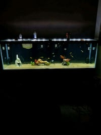 135 gallon aquarium system Round Rock, 78664