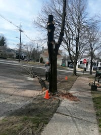 Tree service and more stump removal
