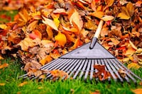 Fall clean up for only $60 per session  [PHONE NUMBER HIDDEN]  548 km
