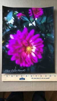 Curly q dahlia by M E Henry Athens, 12015