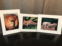Animal prints - set of 3 LOOKING TO MOVE THESE ITEMS. MAKE ME A REASONABLE OFFER. CROSS POSTED.  Land O Lakes, 34639
