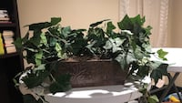 green vine plant with brown pot Boyds, 20841