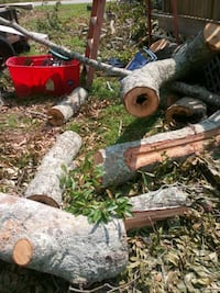 Free firewood. Large Logs