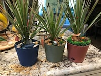 green leaf plants in 3 assorted plant pots Bakersfield, 93308