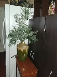 Plant and vase