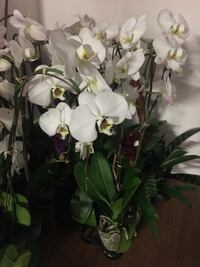 Orchids and bromeliads  Dana Point, 92629