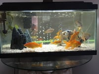 fish tank with lots of fish Included Gurnee, 60031