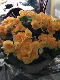 yellow and white petaled flower arrangement Innisfil, L9S