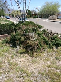 Free Juniper. Clippings & Pinto Beans