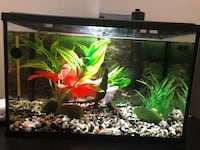5.5 gallon fish tank, stand and everything you need  Calgary, T2H