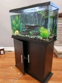 black framed clear glass fish tank Brampton, L6W 1C2
