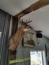 10 point buck bust PORTRICHEY