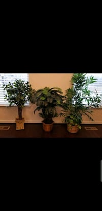 3 fake trees Manassas