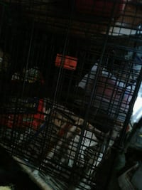 Dog Cage Canton, 44709