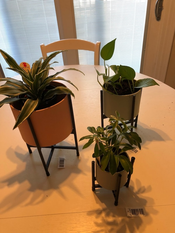 Set of 3 colorful Planters