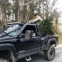 Christmas Tree Removal Finksburg