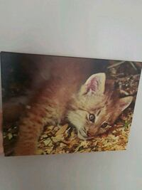 Cub Canvas ( purchased from the Calgary Zoo) Edmonton, T6L 3P9