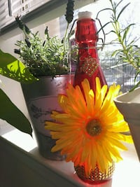 Red Gold Marigold bottle District Heights, 20747