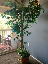 Artificial ficus tree plant