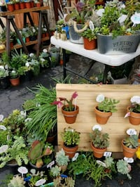 Planting these at lower prices..succulents and pla Fallbrook, 92028