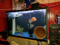 150 gallon wide fish tank with fish New Britain, 06052