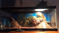Lizard tank.  Only includes tank / top screen / and lights other items you see there is separate  New York, 11372