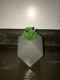 green succulent with gray ceramic vase Lyons, 48851