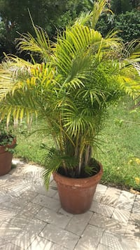 green leaf plant in brown clay pot Miami, 33138