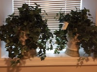 Artificial Ivy Plants in Off White Containers (Qty 2) Kensington, 20895
