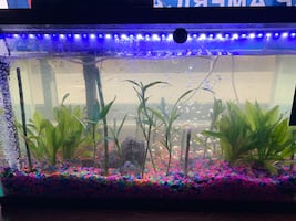 Fish tanks with live plants.