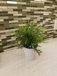 green leaf plant with white pot Vancouver, V6J 1W3