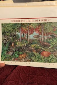 US SCOTT 3899 10 DECIDUOUS FOREST 37 CENTS Stamps MNH 7TH IN SERIES Beltsville, 20705