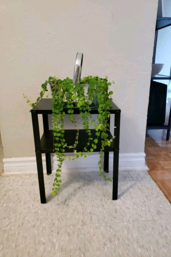 Healthy vine plant with metal stand