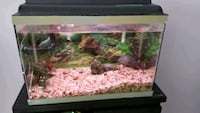 Beautiful aquarium with decorations,filter,rocks Longueuil, J3Y 2K7