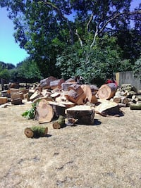 Black walnut wood for sale just chopped down Kelso, 98626