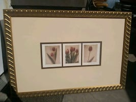 Tullips Paintings /prints with glass and golden..