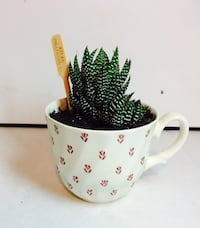 green plant ceramic pot potted Salaberry-de-Valleyfield, J6S 4B8