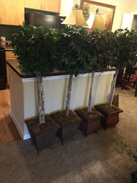 green potted plants San Antonio, 78230